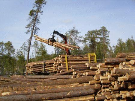 Договор переуступки прав аренды лесного участка