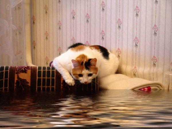 Если затопил соседей снизу